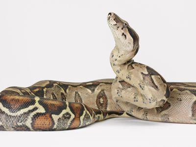 Carpet Python Terrarium