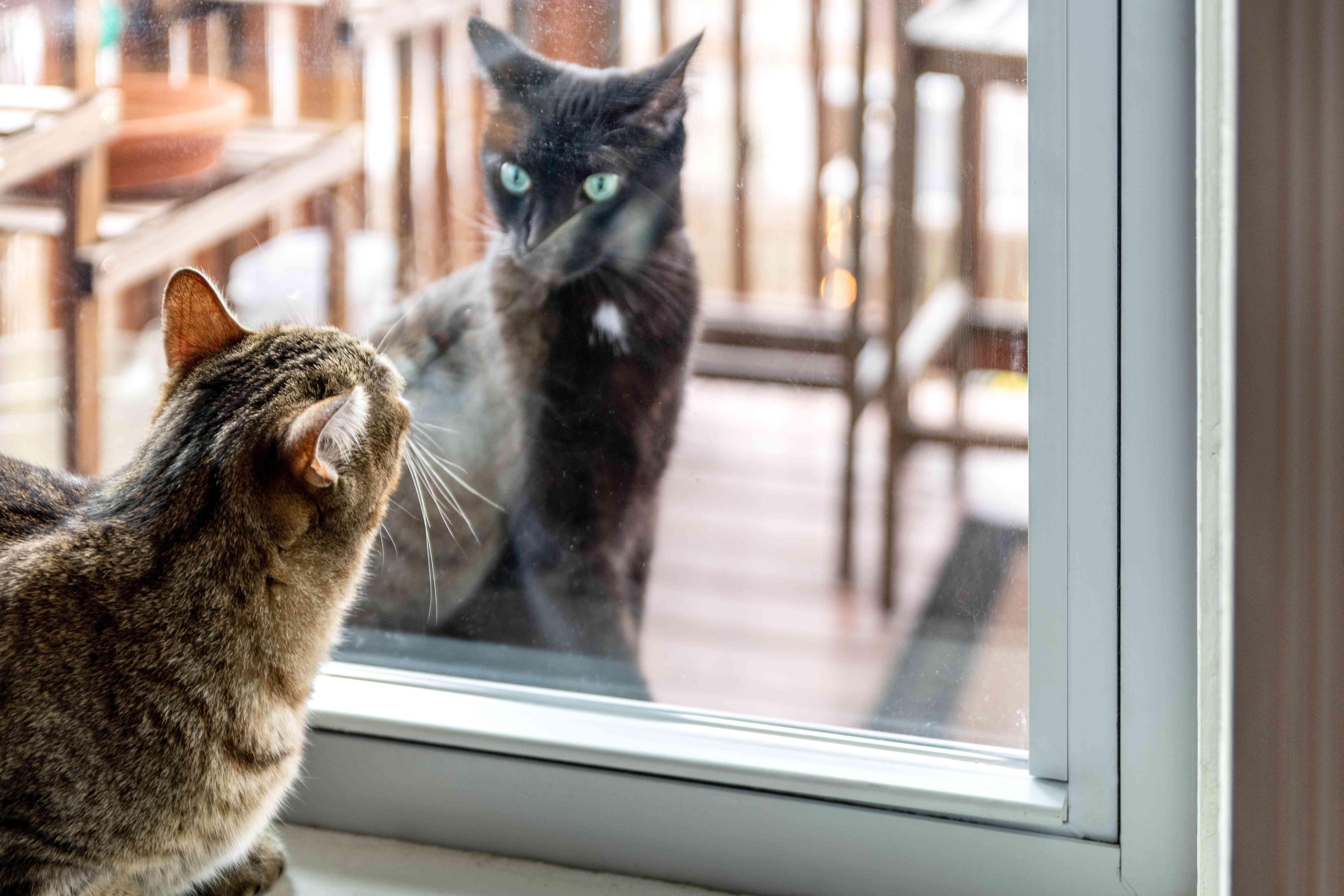 Strange cat outside glass sliding door in front of brown cat