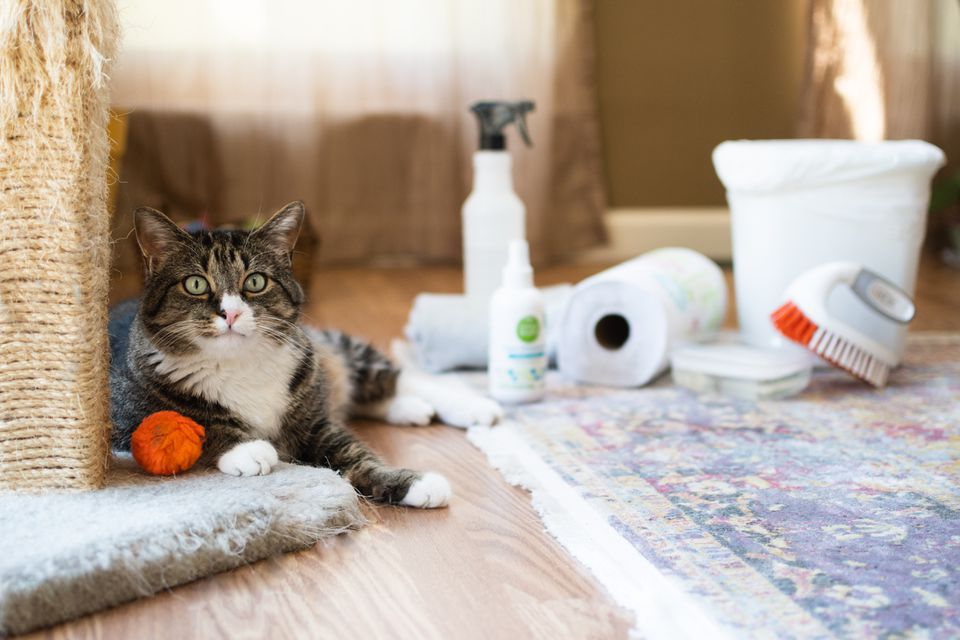Brown and white cat next to scratching pole and orange ball and cleaning materials for messes