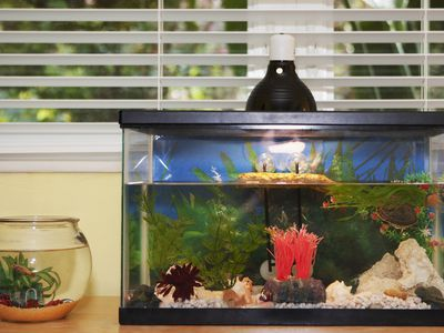 Terrific R Aquarium Christmas Gifts