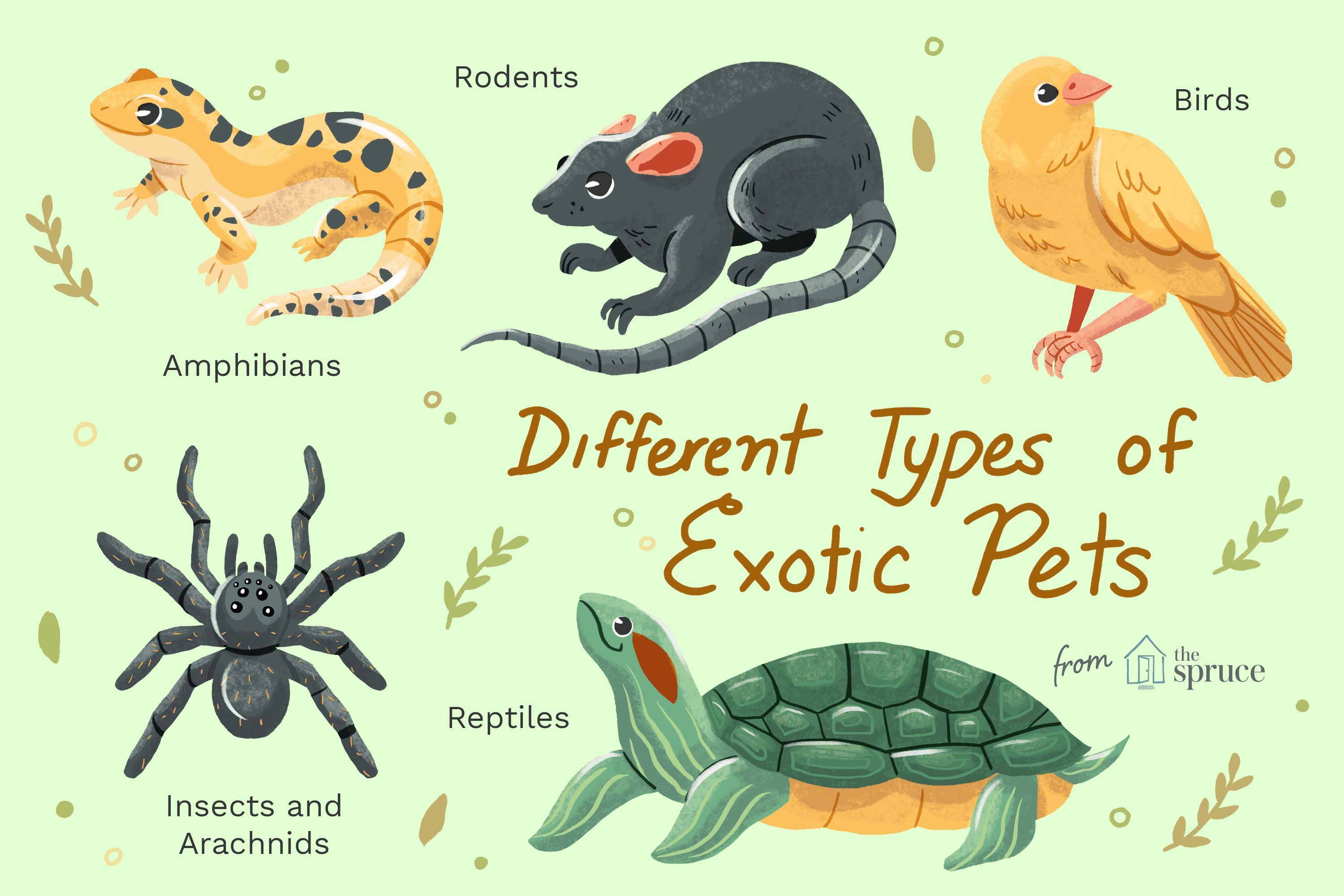 Types of Exotic Pets