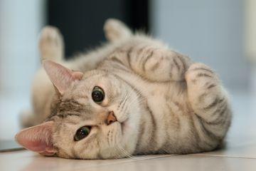 Cat rolling on the floor.