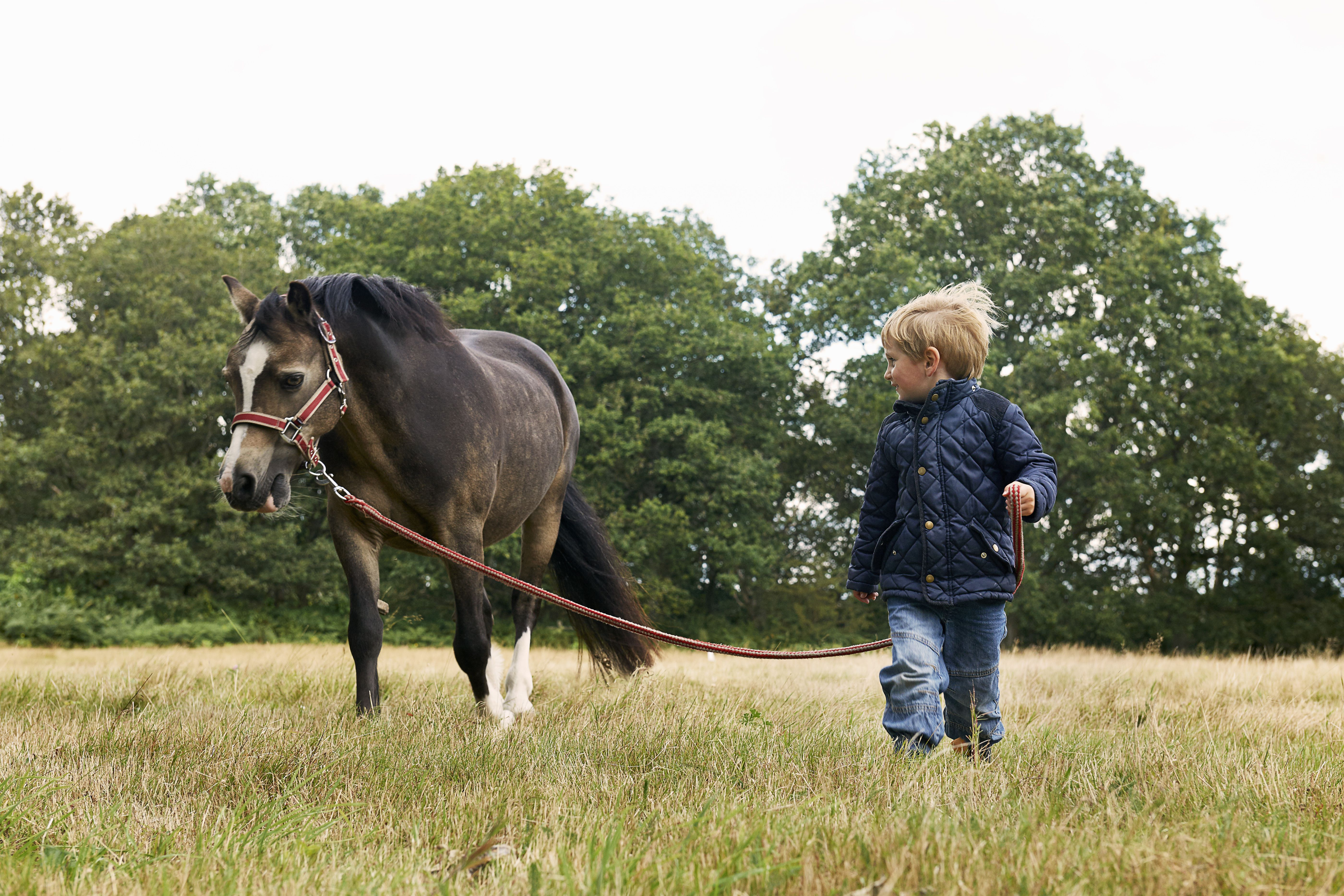 Pequeño muchacho que lleva el potro en un campo.