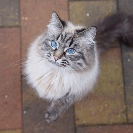 10 Cute Maine Coon Cats And Kittens
