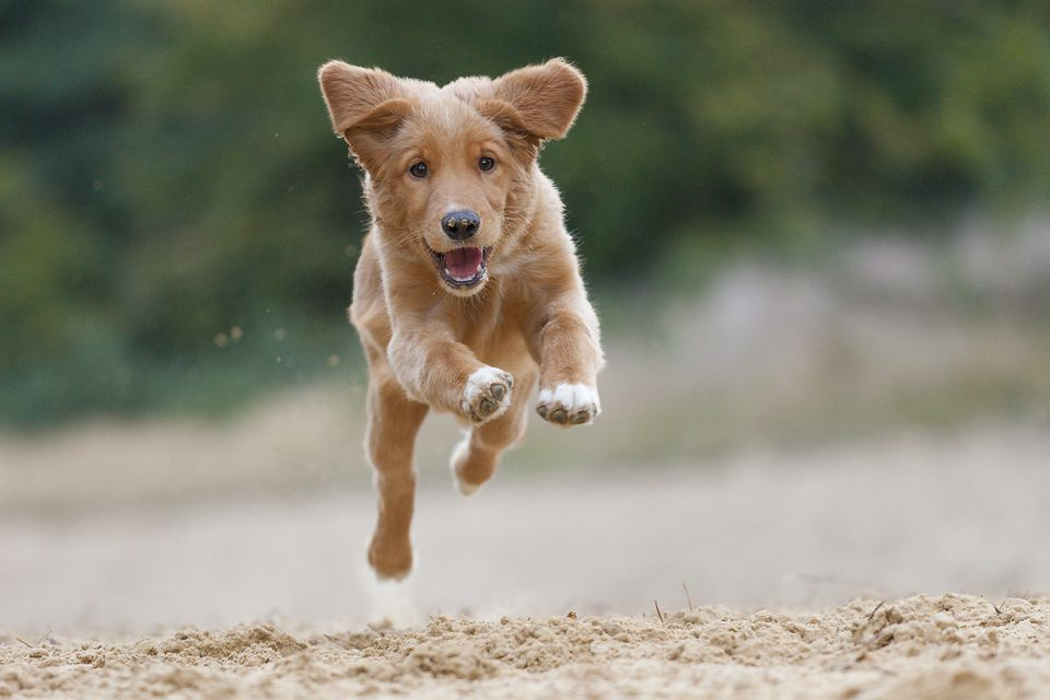 Flying Toller