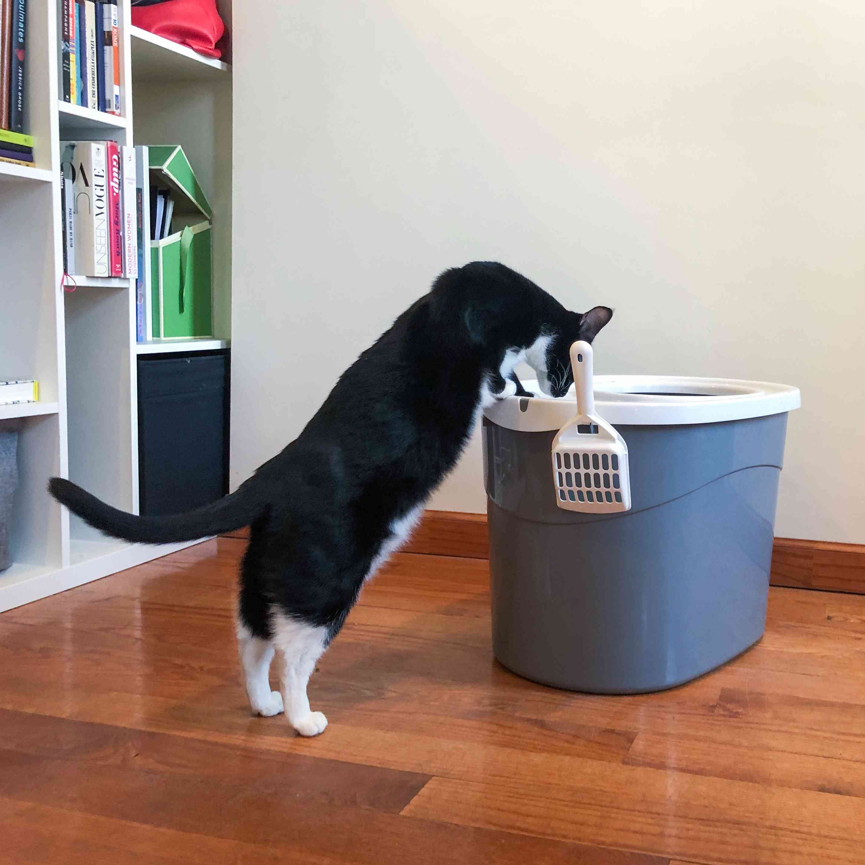 The 7 Best Cat Litter Boxes of 2020