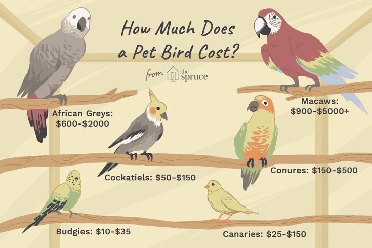 How Much Does It Cost To Buy And Care For A Pet Bird