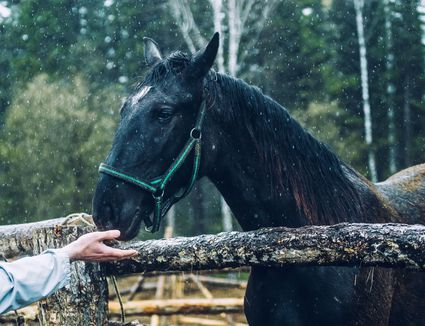 Horse sniffing hand