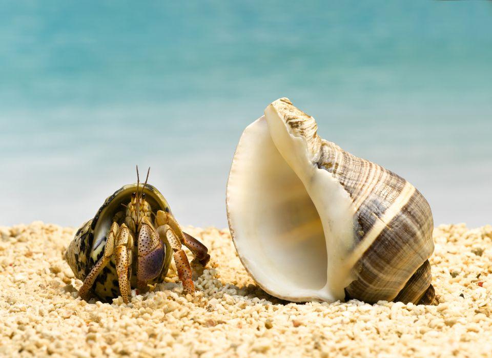 Cangrejo ermitaño y una concha en la arena