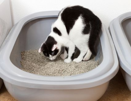 Why Cats In The Sink Or Bathtub And How To Stop It