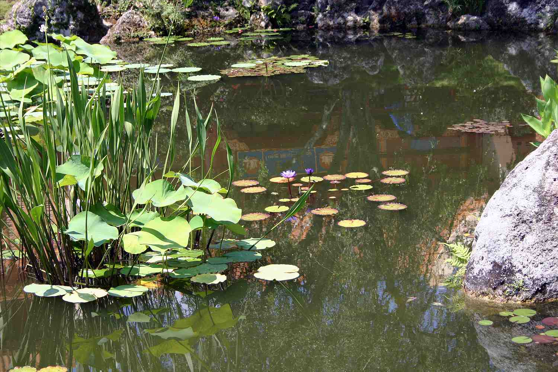 Aquatic plants that propagate by seed