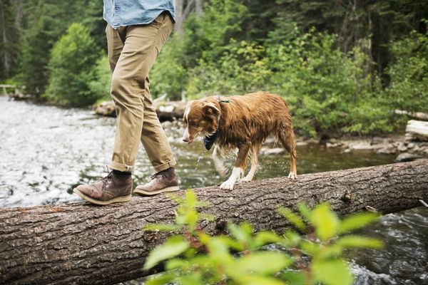 Low section of man walking with dog on fallen tree over river