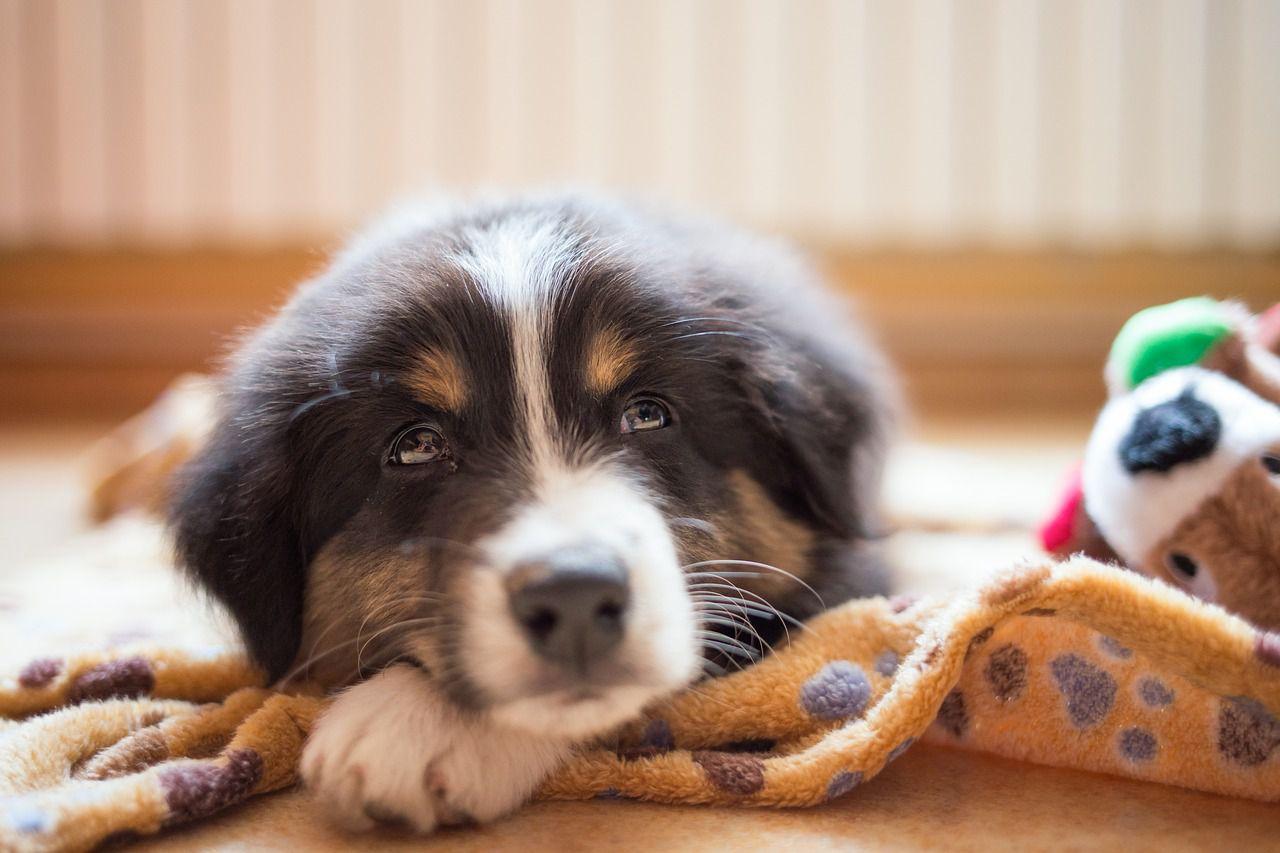 cachorro acostado en una manta en casa
