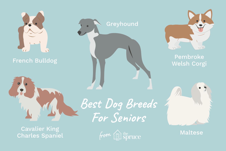 Ilustración de las mejores razas de perros para personas mayores