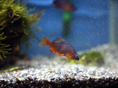 Do Aquarium Water Changes Kill Fish?