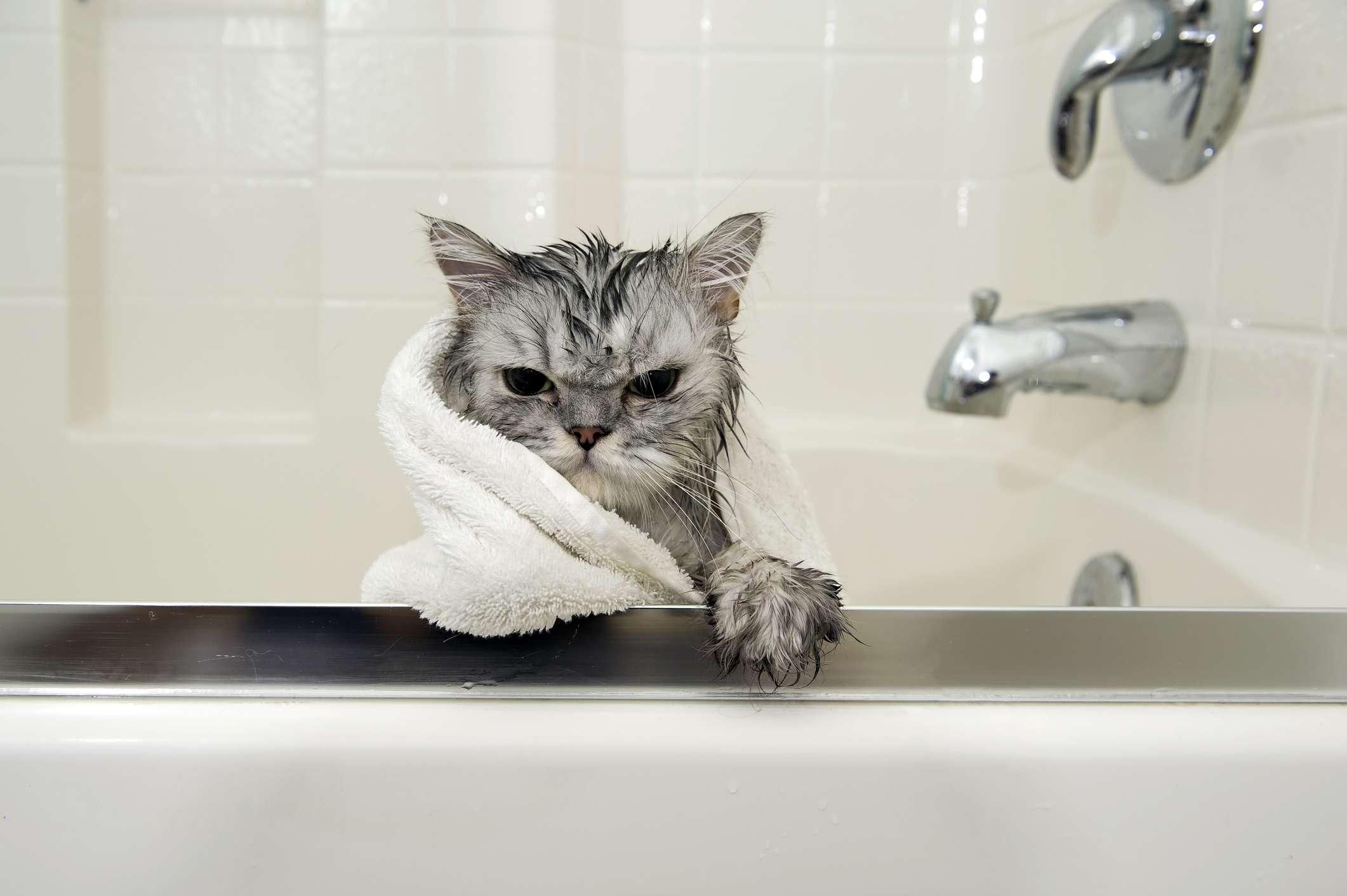Gato en una toalla en el baño
