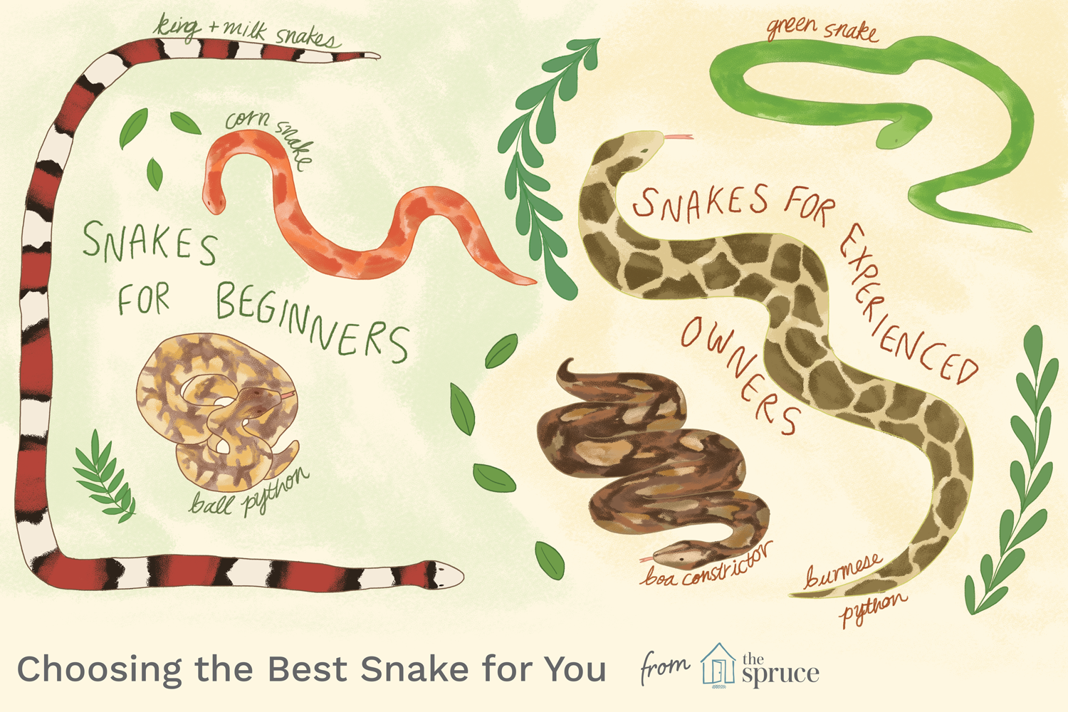 How To Choose The Best Pet Snake For You