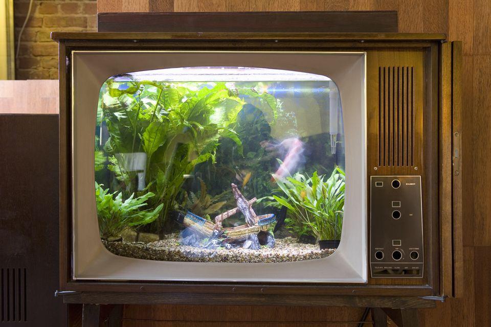 Una pecera en un televisor