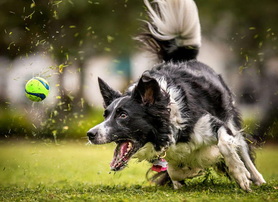 Deportes para perros