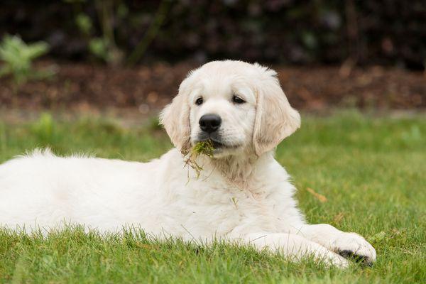 Happy puppy II