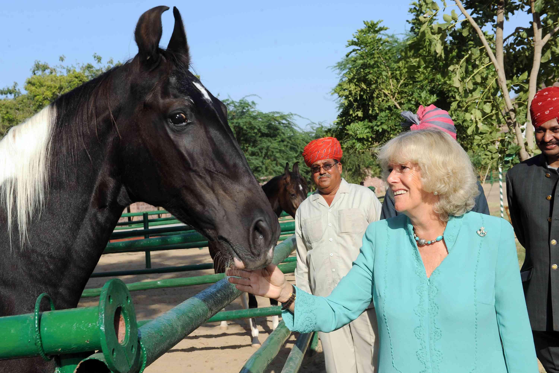 Camilla, duquesa de Cornualles visita un pinto Marwari en India.