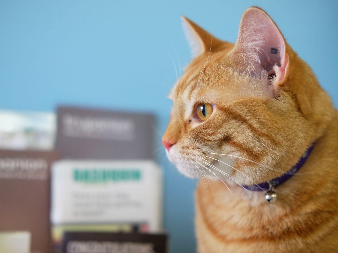 How To Treat Coronavirus In Cats