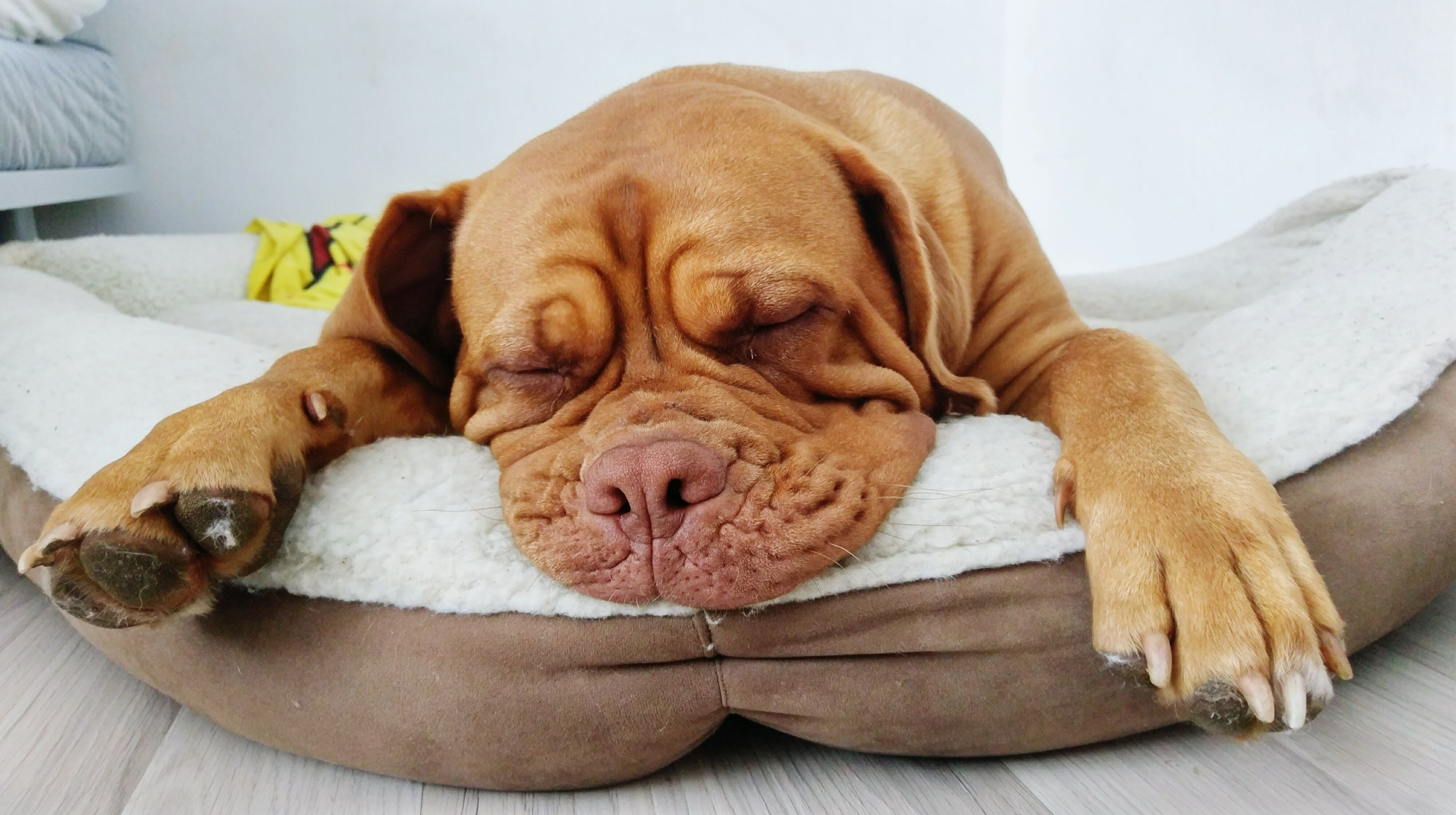 The 7 Best Cooling Dog Beds Of 2020