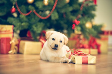 puppy proof the christmas tree