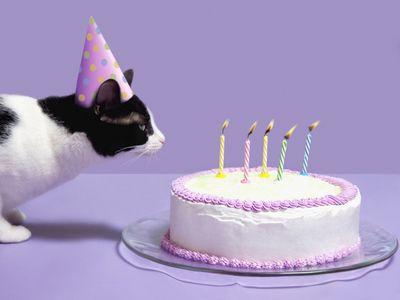 7 Fun Ways To Celebrate Your Cats Birthday