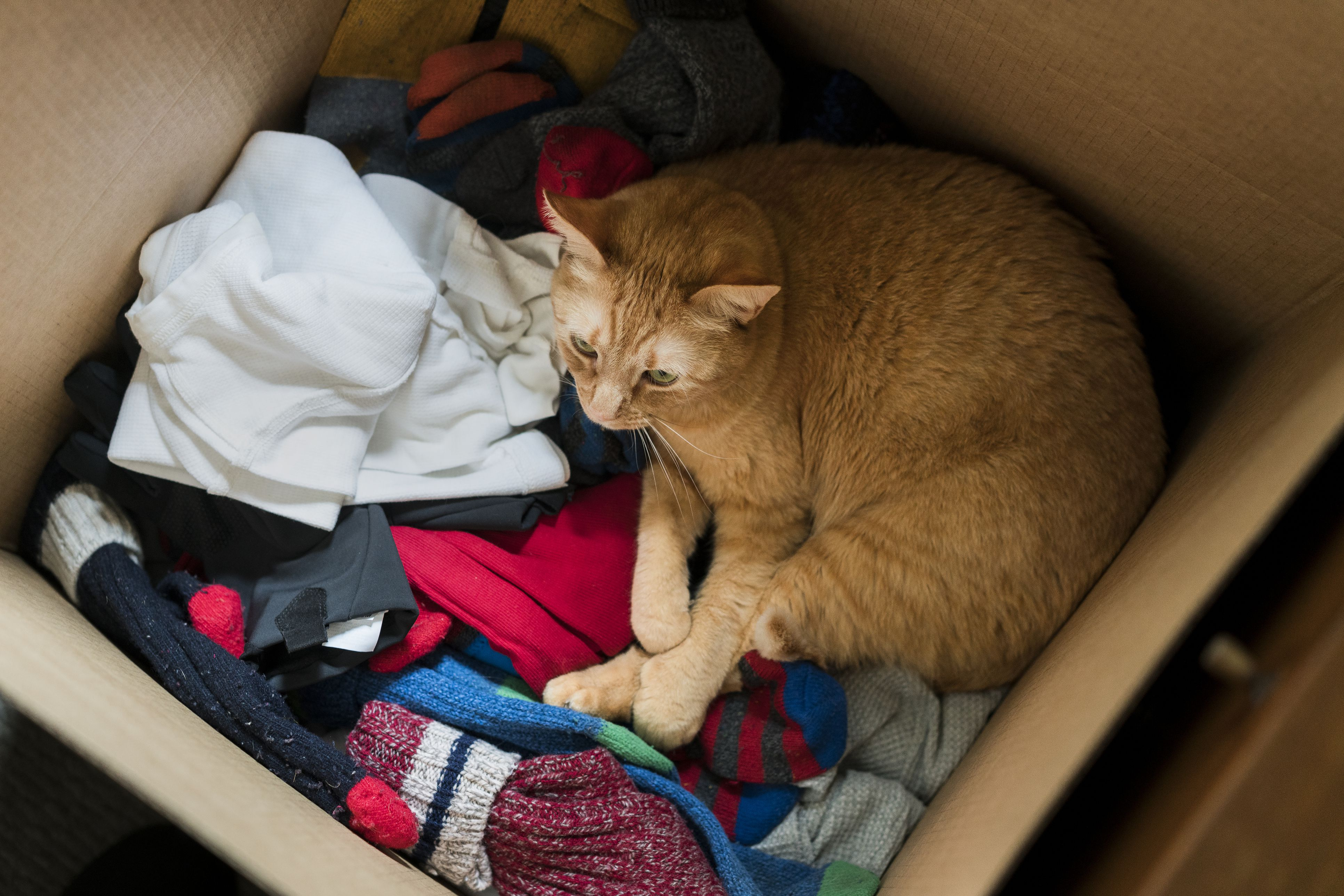 How to Help Cats Adjust After a Stressful Move