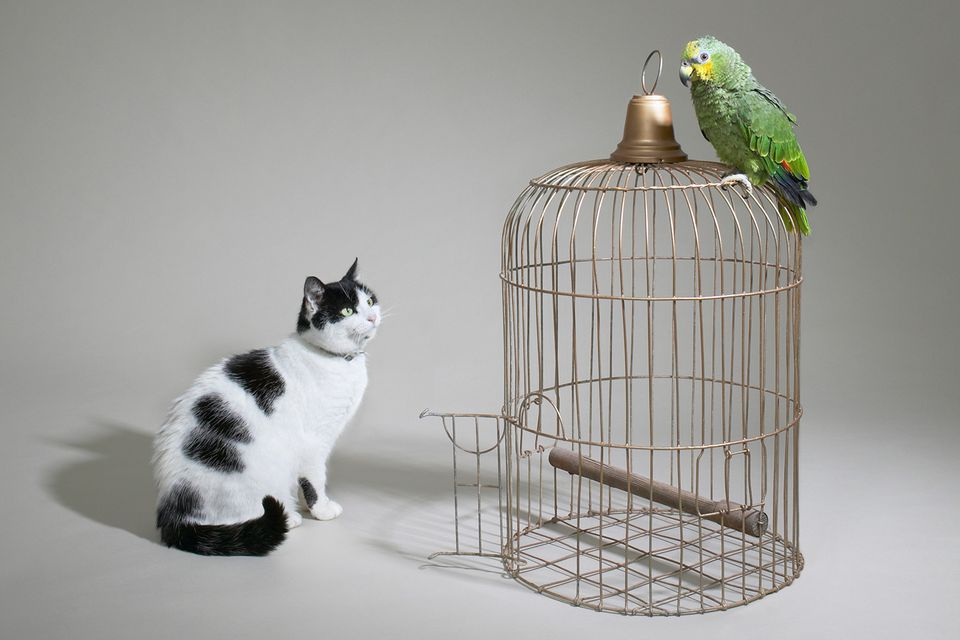 Cat looking at parrot