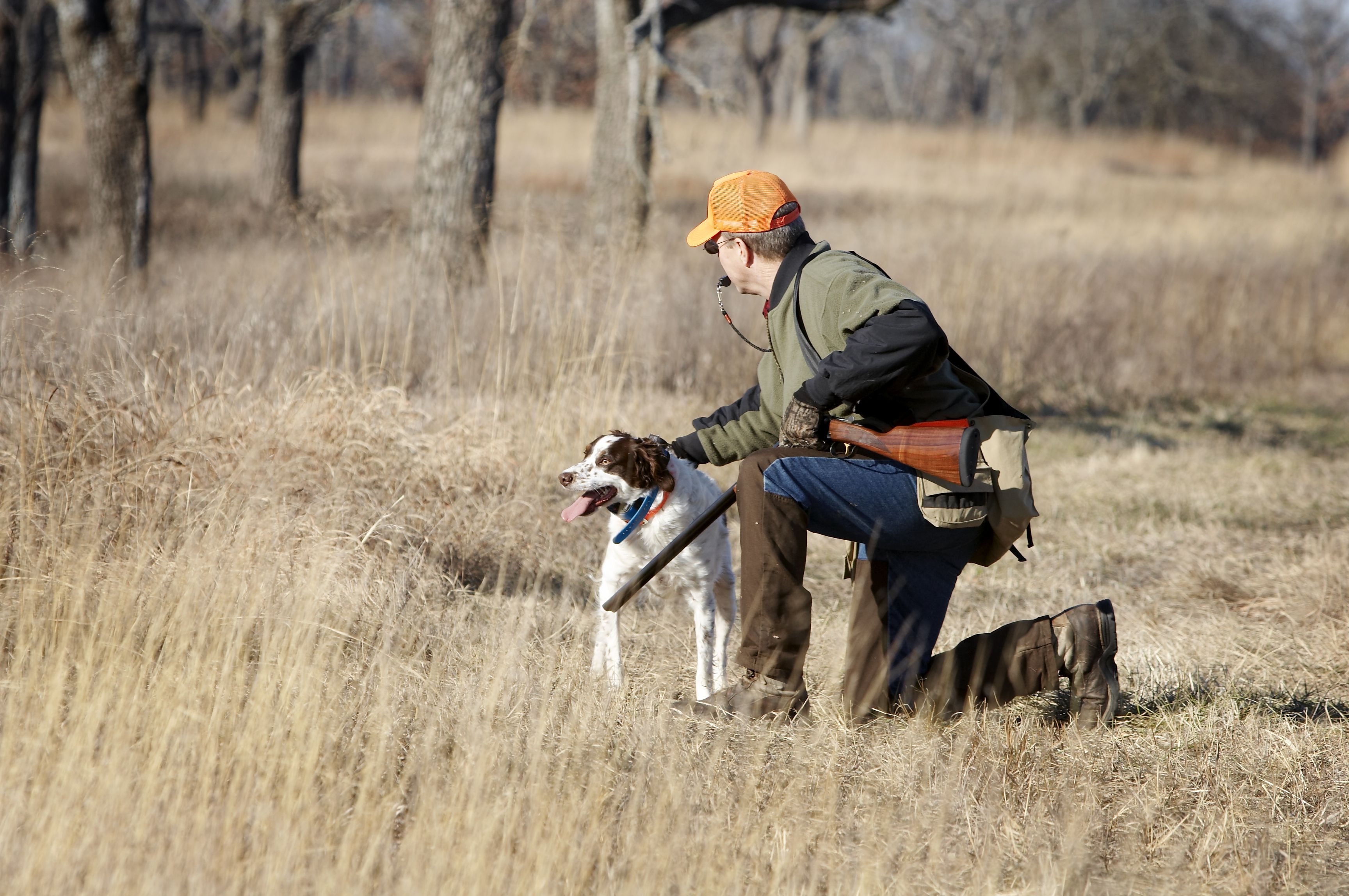 Hunting and brittany pup