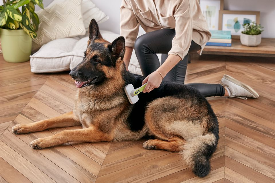 a woman brushing a German Shepherd