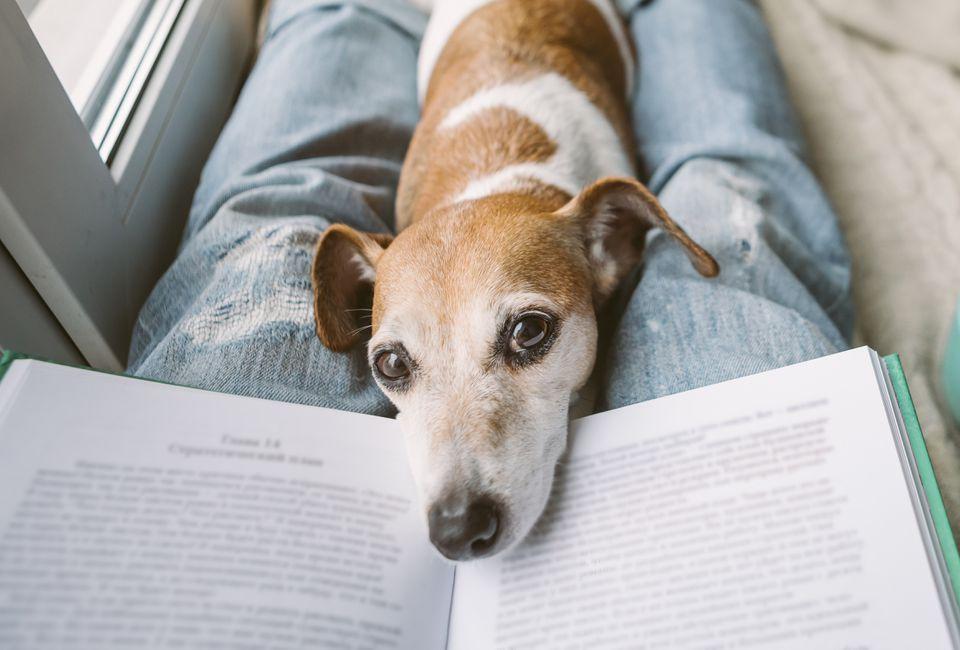 perro acostado en un libro