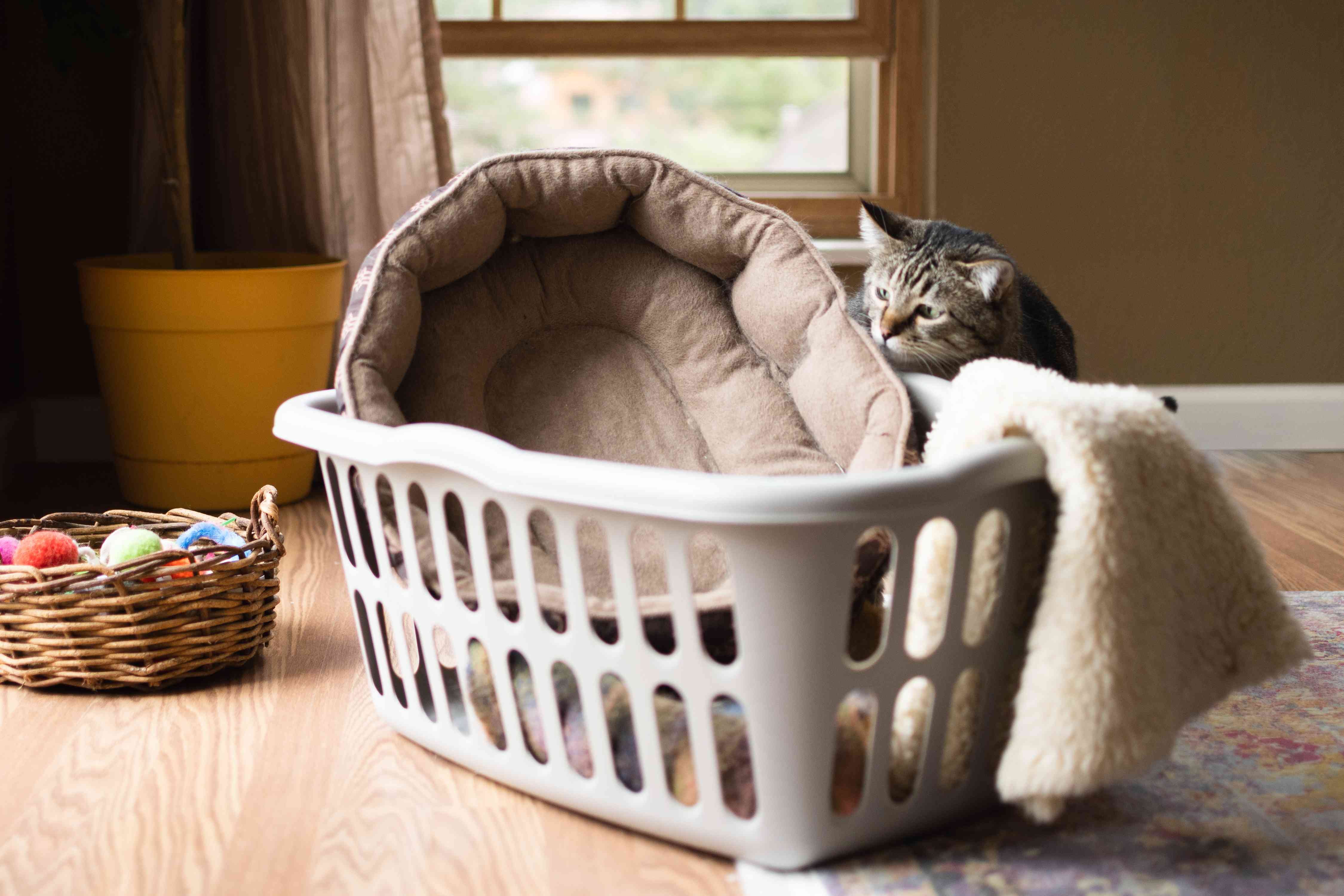 Cat bed and white rug in hamper for cleaning