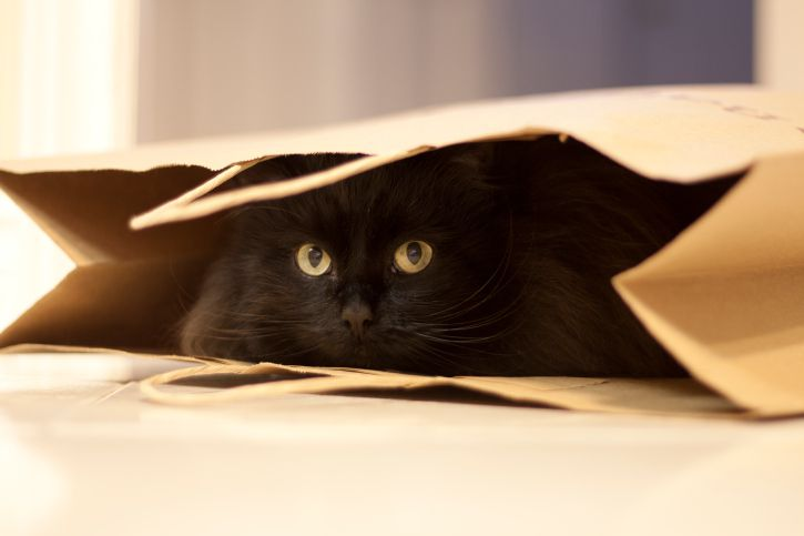 Cat hiding in a bag