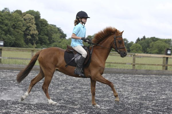 Girl riding a chestnut horse, side view