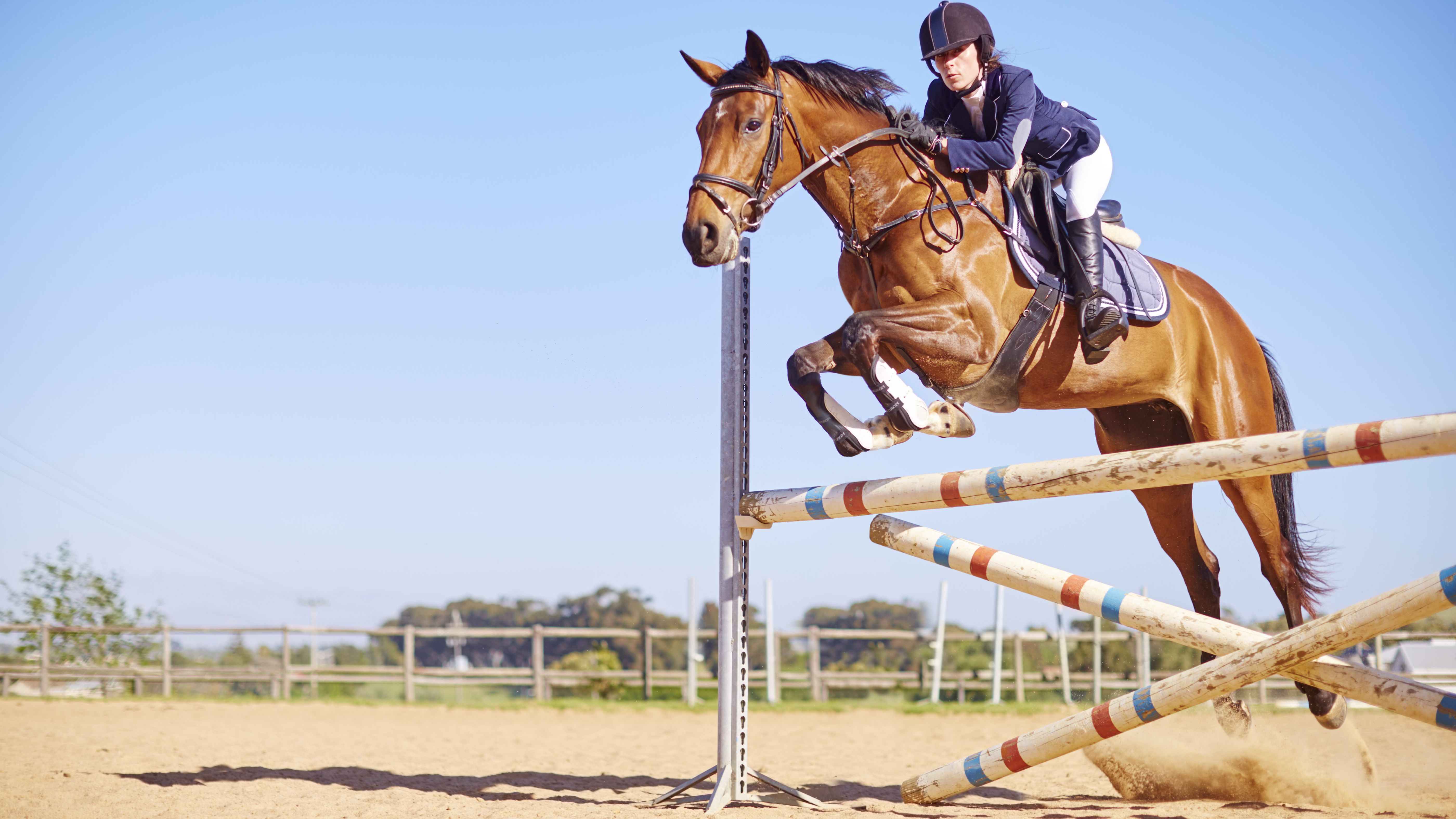 Introduction To Jumping In Horseback Riding