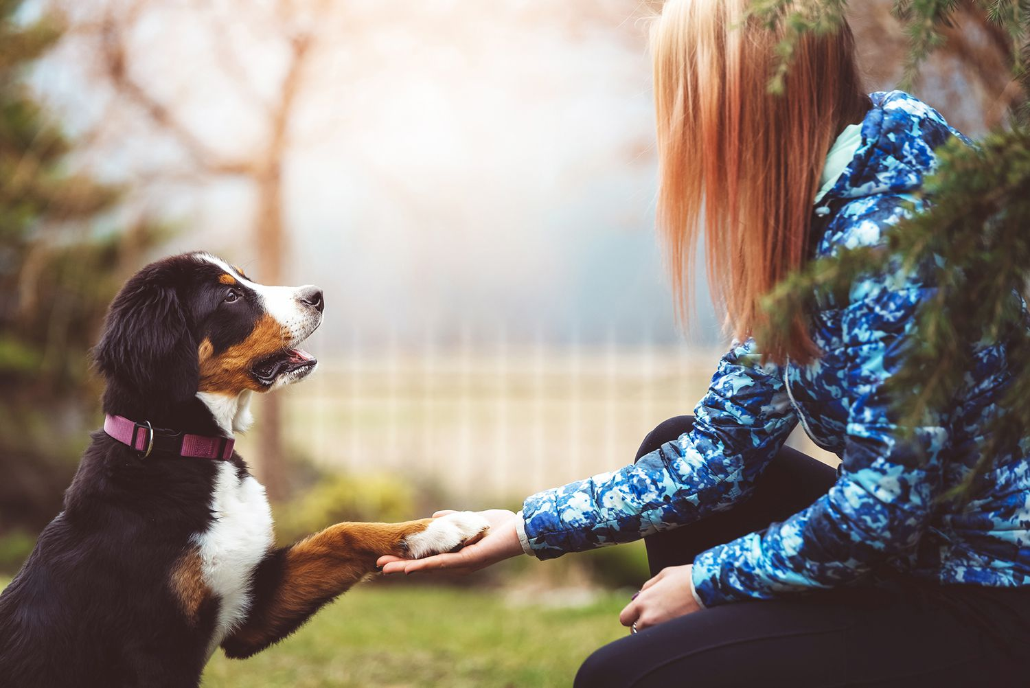 How Do Puppies Communicate With People?