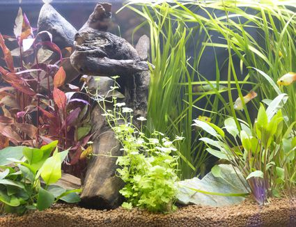 Beautiful freshwater planted aquarium