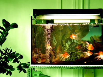 How to Repair Leaks in Glass Aquariums