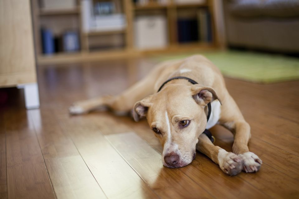 sad dog sick dog
