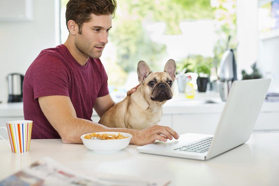 Hombre en la computadora portátil con bulldog francés