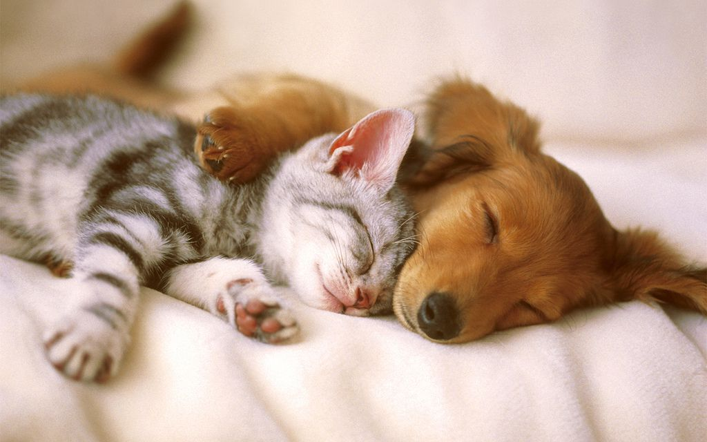A cat and dog cuddling while sleeping
