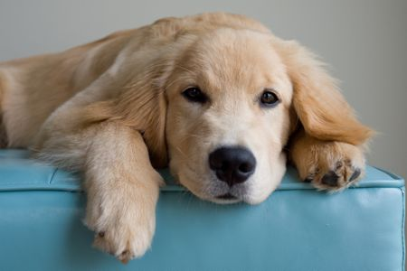 Natural Remedies For Dog And Puppy Hot Spots