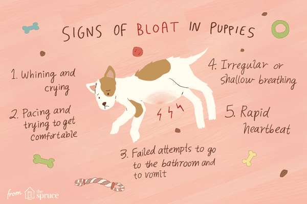 Illustration of a bloated puppy and symptoms