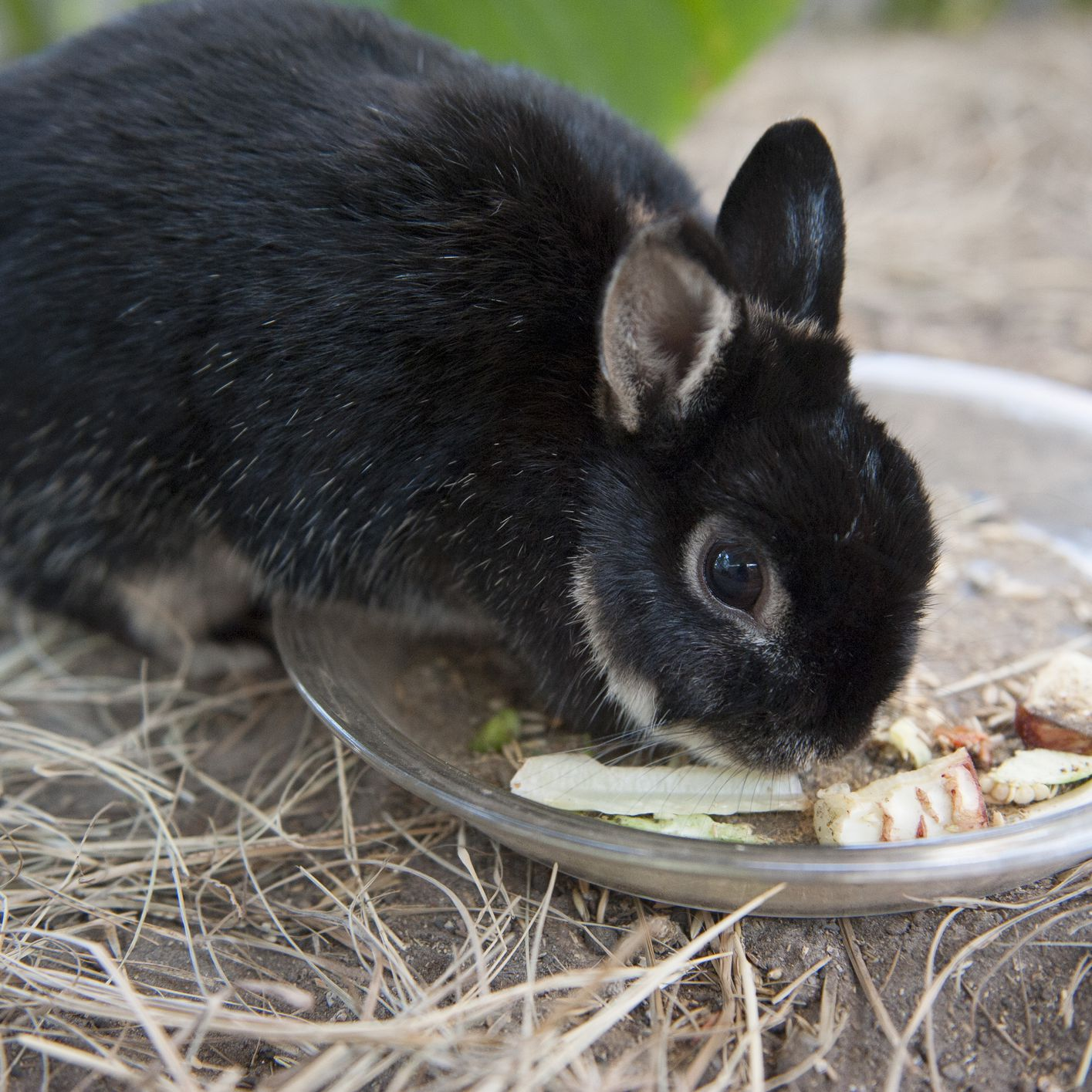 do all rabbits have the same diet