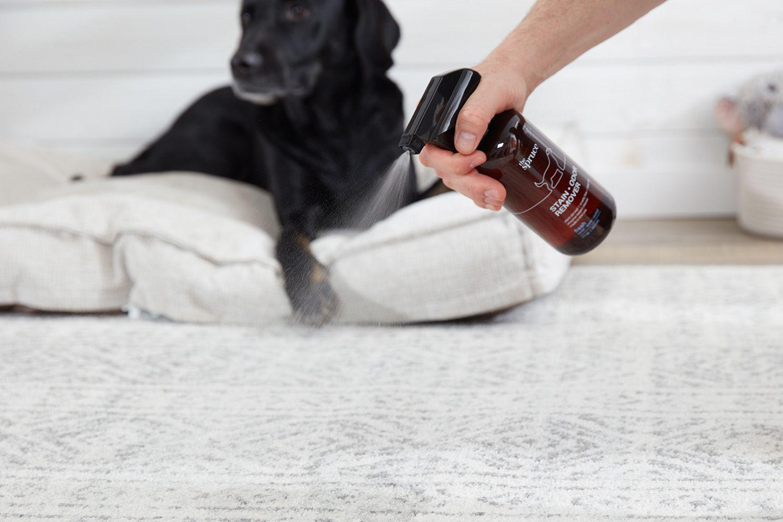 Rociar quitamanchas y olores en la alfombra