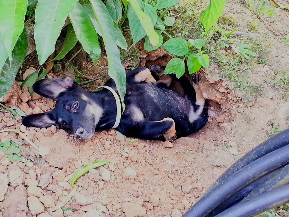 Puppy Rolling in Dirt