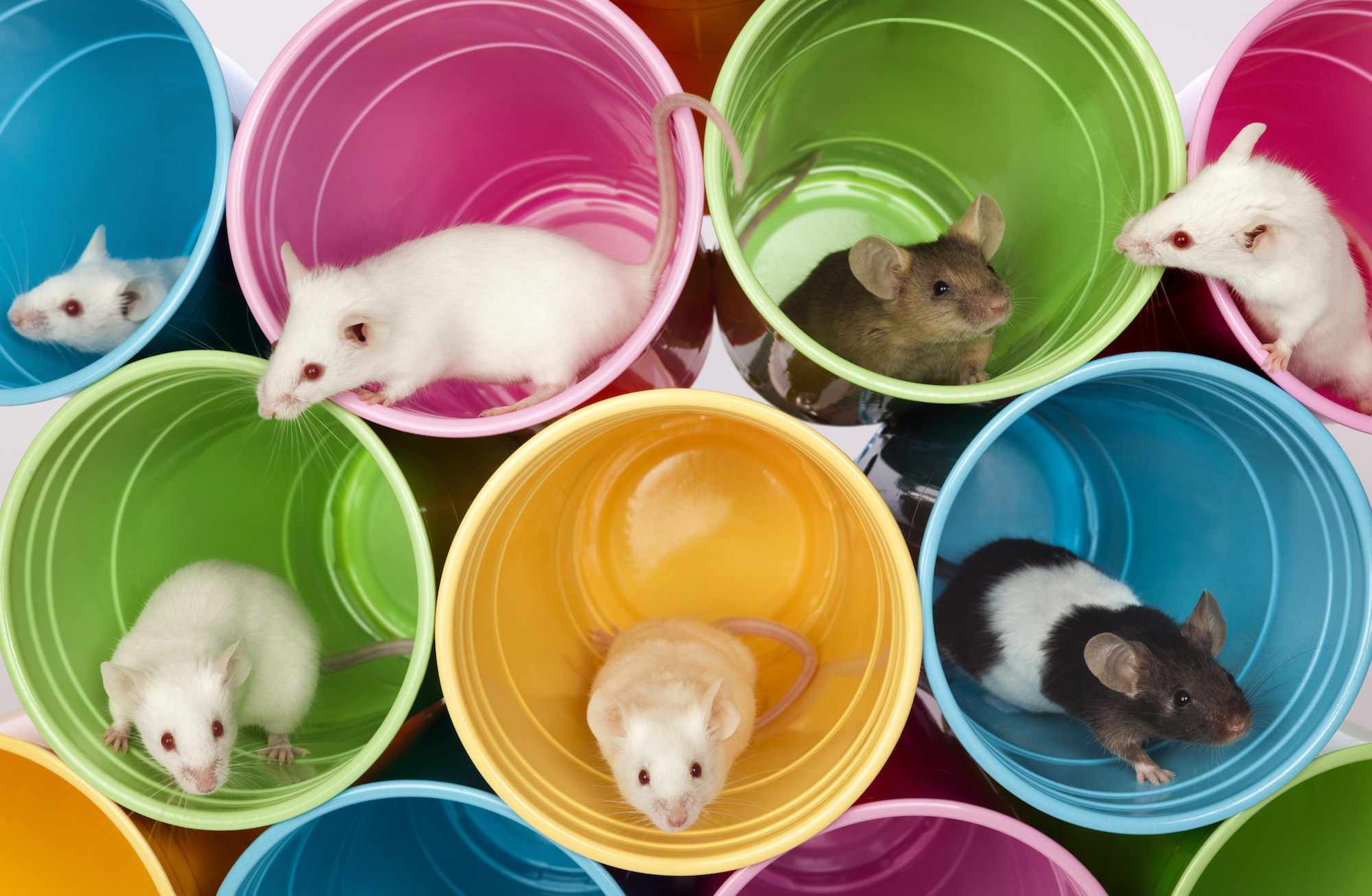 Mice sitting in colorful cups